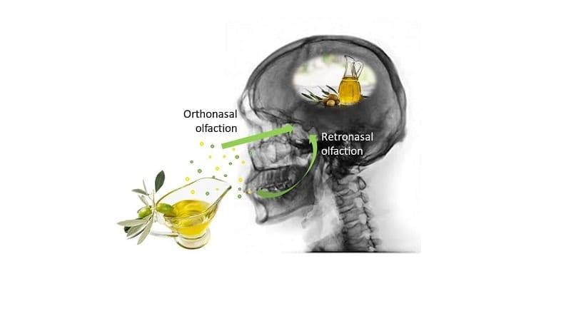 formula chimica olio di oliva